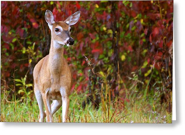 Greeting Card featuring the photograph Cades Cove Doe by Bob Decker