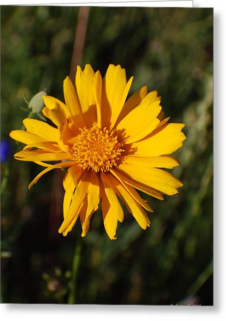 Cafe Art Floral Series - Wild Sunflower  Greeting Card by Michelle  BarlondSmith