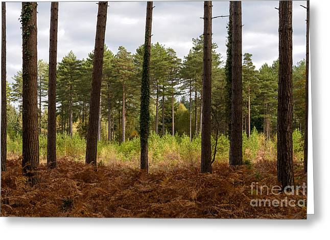 Caged In New Forest Greeting Card