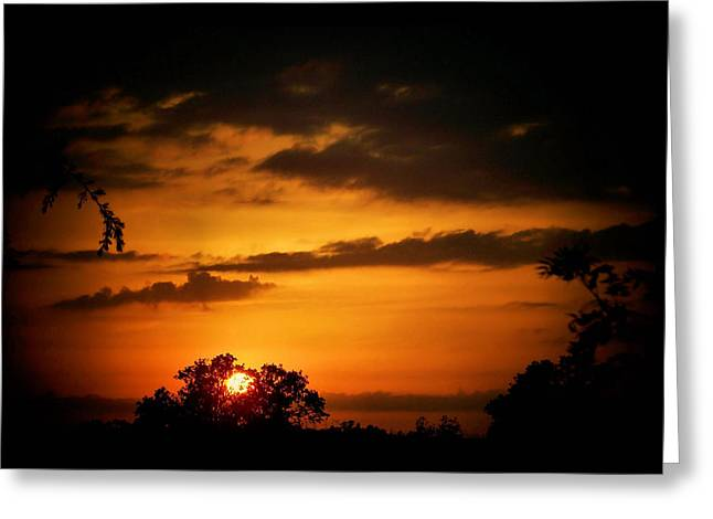 Caged Sunset Greeting Card by Karen M Scovill