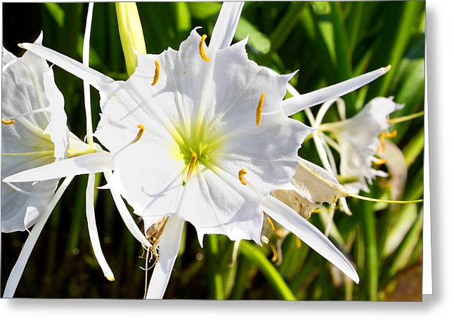 Cahaba Lily Greeting Card