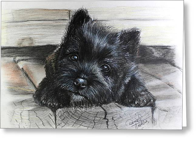 Cairn Terrier Greeting Card by Daniele Trottier