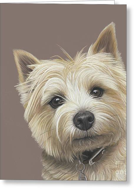 Greeting Card featuring the painting Cairn Terrier - Dave by Donna Mulley