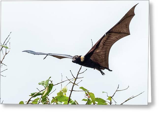 Cairns Fruit Bat Greeting Card