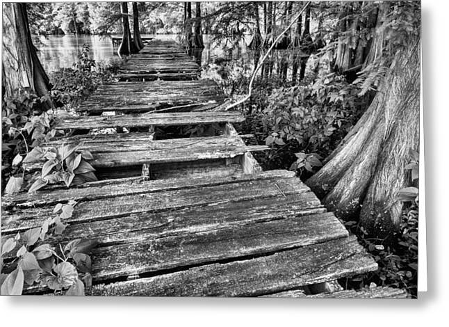Cajun Country Bw Greeting Card by JC Findley