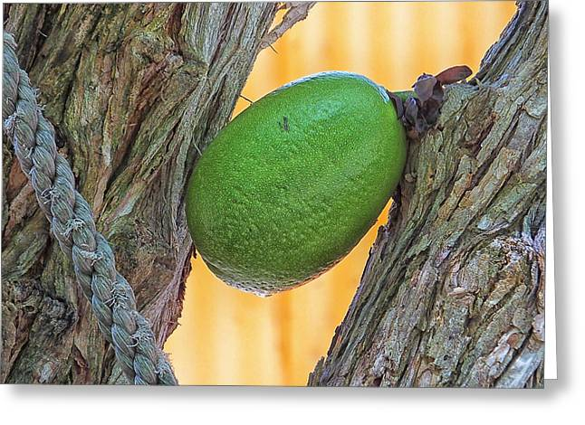 Greeting Card featuring the photograph Calabash Fruit by Bill Barber