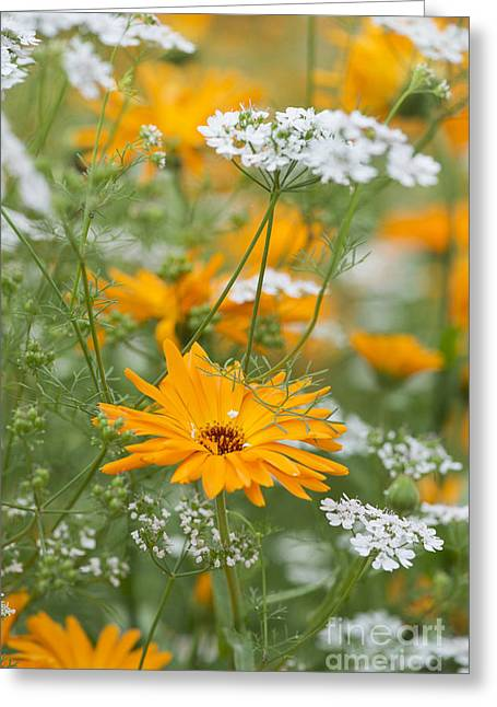 Calendula And Coriander Greeting Card by Tim Gainey