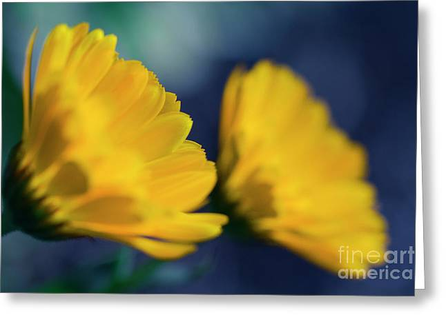 Greeting Card featuring the photograph Calendula Flowers by Sharon Mau