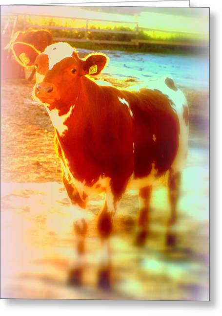 This Calf Has A Hope For A Long And Happy Life But How And When Will It End   Greeting Card by Hilde Widerberg