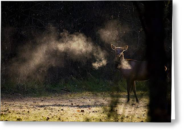 Greeting Card featuring the photograph Calf Elk In December by Michael Dougherty