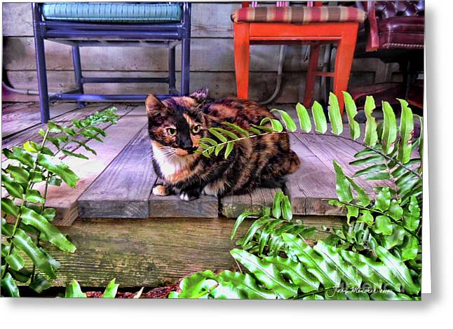 Calico Cat Key West Porch Greeting Card by Joan Minchak