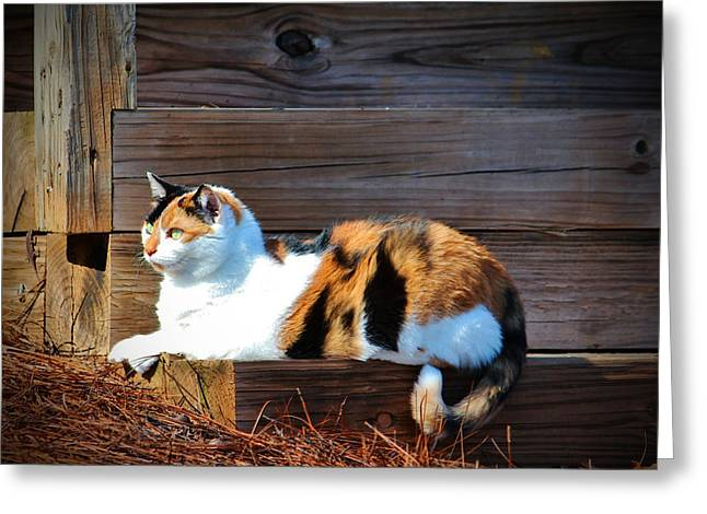 Calico Cat On The Steps Greeting Card