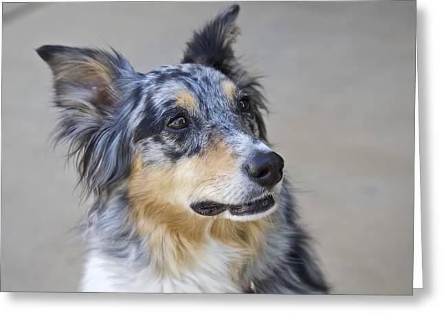 Calico Dog Greeting Card by Robert Joseph