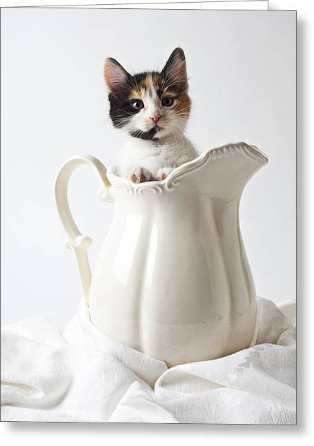 Felines Photographs Greeting Cards - Calico kitten in white pitcher Greeting Card by Garry Gay