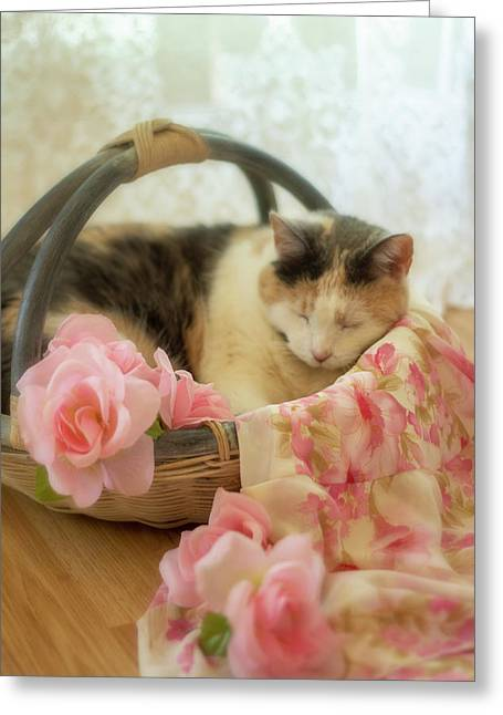 Calico Kitty In A Basket With Pink Roses Greeting Card
