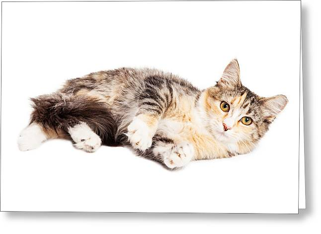 Calico Kitty Laying Over White Greeting Card by Susan Schmitz