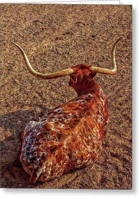Calico Longhorn Greeting Card by Linda Unger