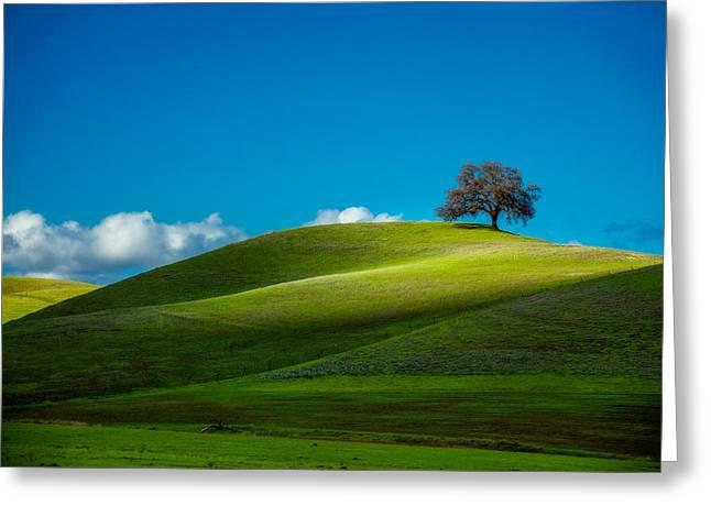 California Black Oak Greeting Card