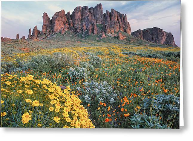 California Brittlebush Lost Dutchman Greeting Card by Tim Fitzharris