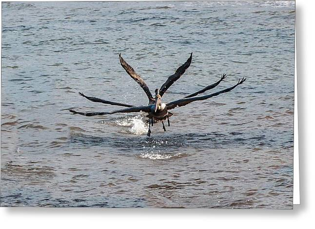 California Brown Pelicans Flying In Tandem Greeting Card