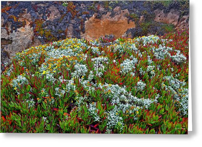 California Coast Wildflowers Greeting Card