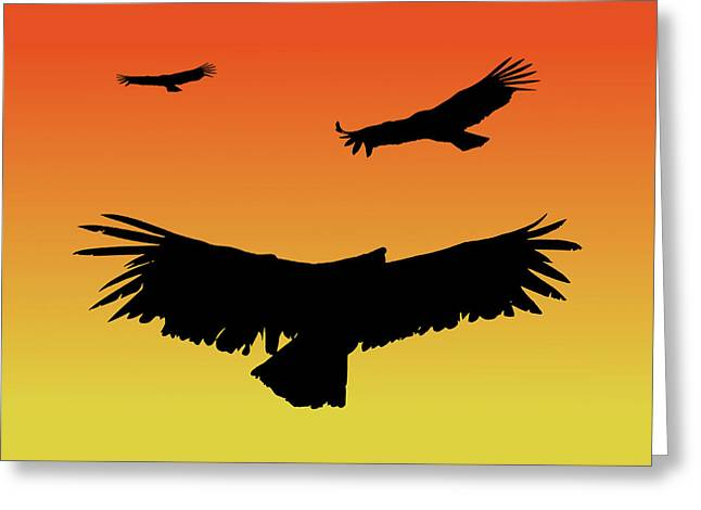 California Condors In Flight Silhouette At Sunset Greeting Card