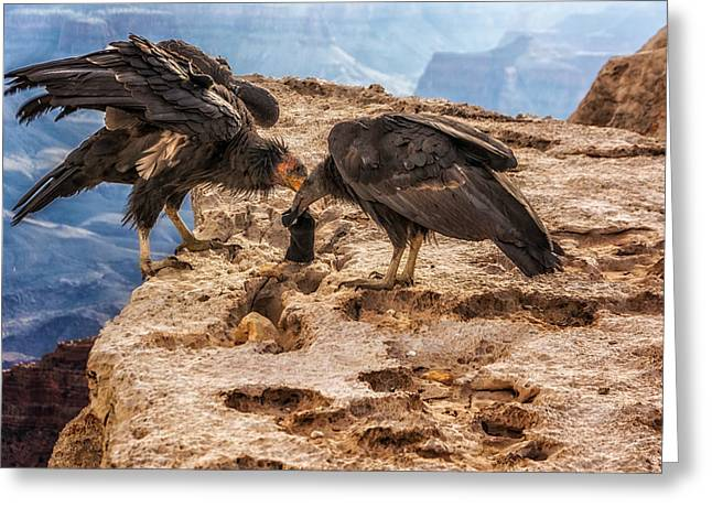 Greeting Card featuring the photograph California Condors Inspecting A Sock by Claudia Abbott
