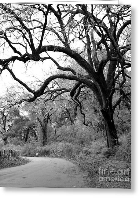 California Country Road Greeting Card