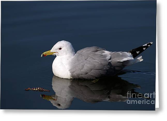 Greeting Card featuring the photograph California Gull by Sharon Talson