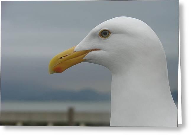 California Gull Greeting Card by Wayne Whitney