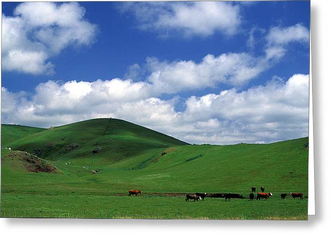 Cows Framed Prints Greeting Cards - California Hills with Cows Greeting Card by Kathy Yates