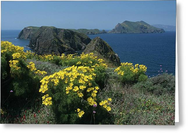 California Island Sunshine Greeting Card