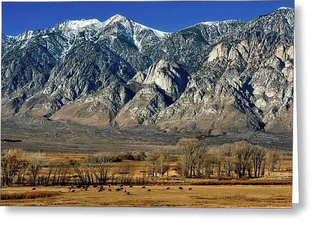 California Mountain Meadow Greeting Card by Mountain Dreams