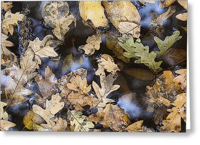 Greeting Card featuring the photograph California Oak Leaves  by Sherri Meyer