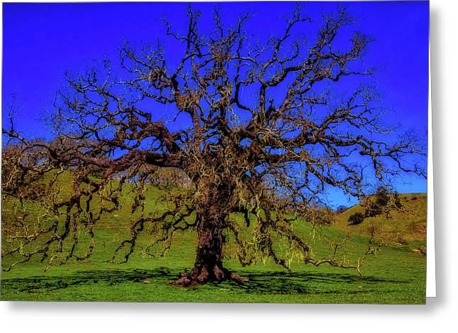 California Oak Tree Greeting Card by Garry Gay