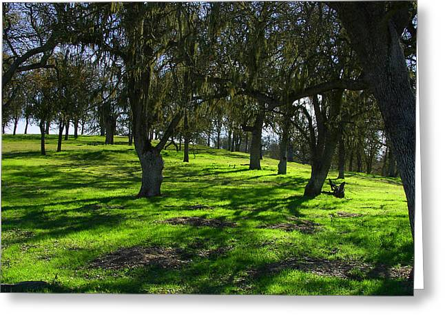 California Oak Woodland With Dappled Sunlight Greeting Card