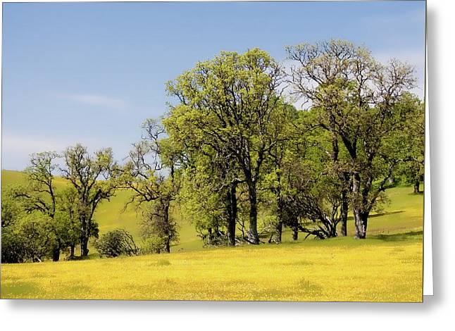 California Oaks And Wildflowers Greeting Card
