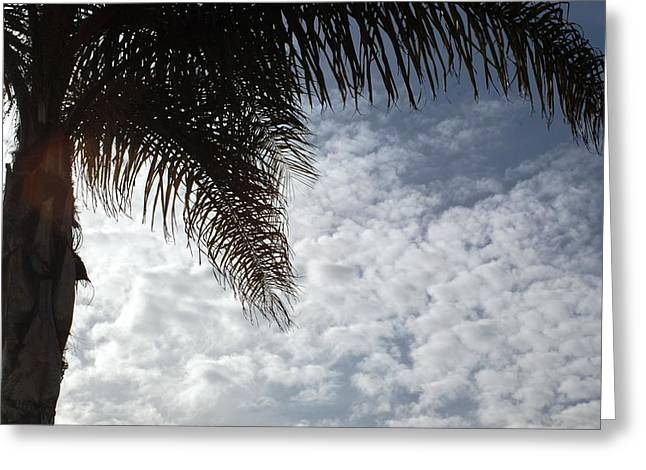California Palm Tree Half View Greeting Card by Matt Harang