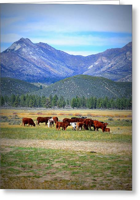 Greeting Card featuring the photograph California Pastures by Glenn McCarthy Art and Photography