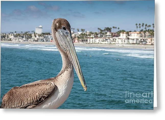 Greeting Card featuring the photograph California Pelican by John Wadleigh