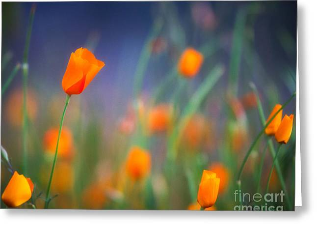 California Poppies 2 Greeting Card