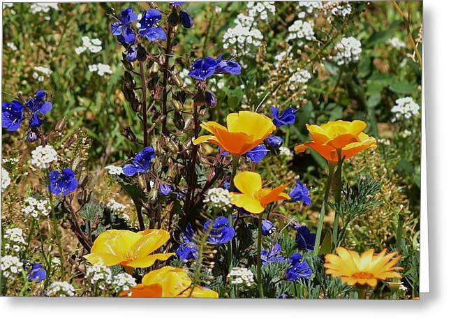 California Poppies And Bluebells 2 Greeting Card