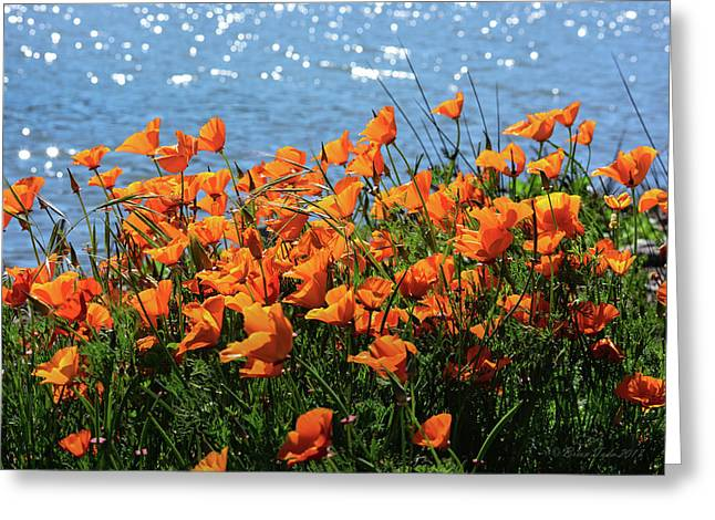 California Poppies By Richardson Bay Greeting Card