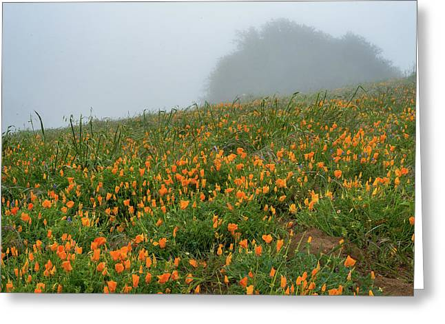 California Poppies On Volcan Mountain Greeting Card