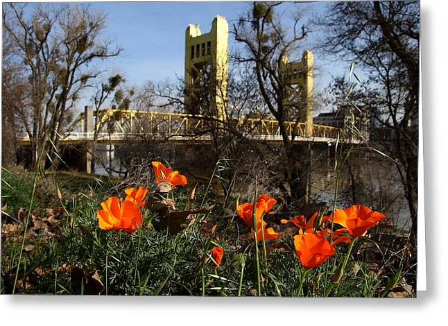 Capitol Flowers Greeting Cards - California Poppies With The Slightly Photographically Blurred Sacramento Tower Bridge In The Back Greeting Card by Wingsdomain Art and Photography