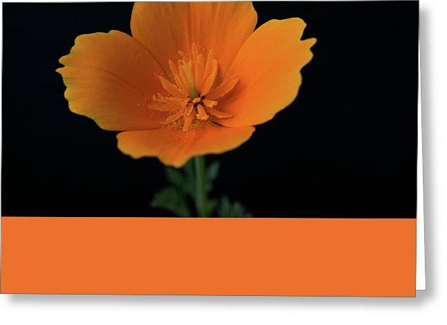 Orange On Black- California Poppy Greeting Card