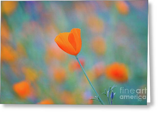 Spring Poppy Greeting Card by Anthony Bonafede