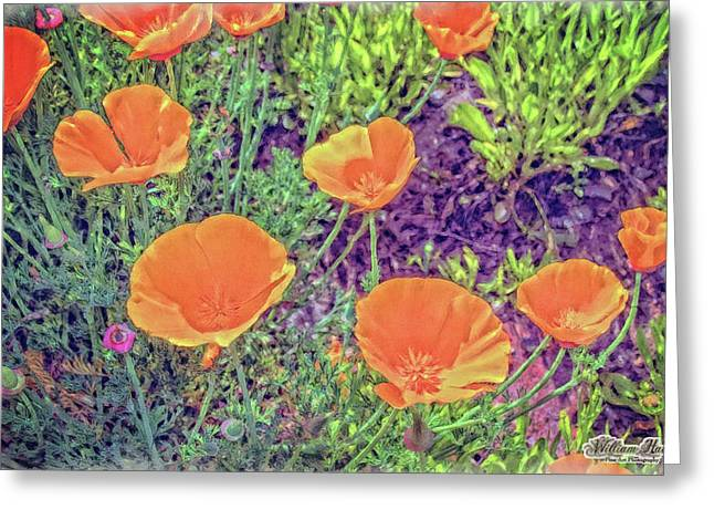 California Poppys Too Greeting Card by William Havle