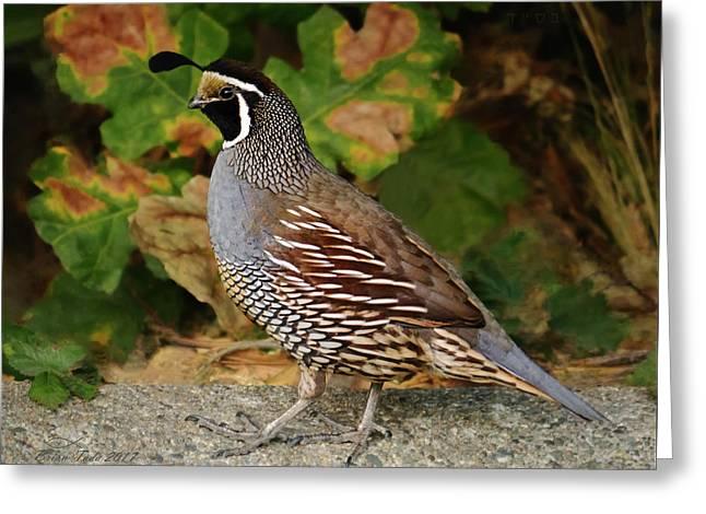 California Quail Rooster Greeting Card