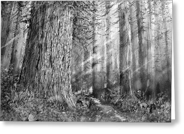 California Redwood Enchanced Greeting Card by Jim Hubbard